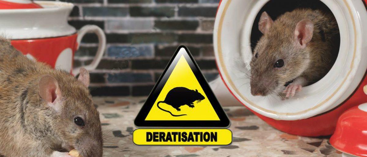 Permalien vers:Dératisation
